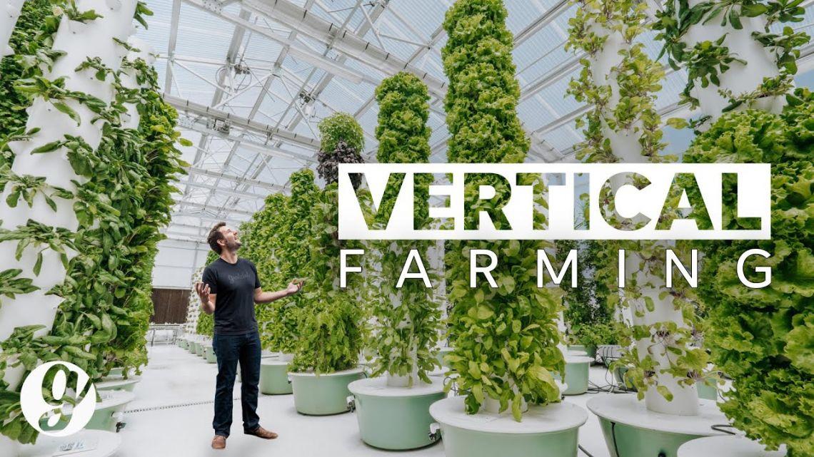 الزراعة العمودية vertical farming